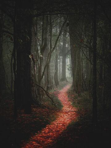 File:Path-1.jpg