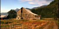 The Abandoned Farm Field