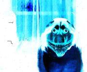 Smile-dog-e1271310838155