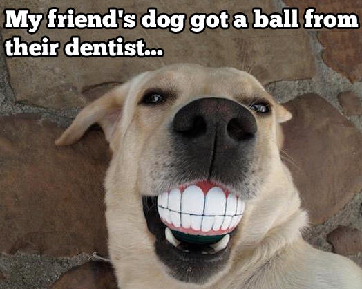 File:Dog-gets-a-present-from-the-dentist.jpg