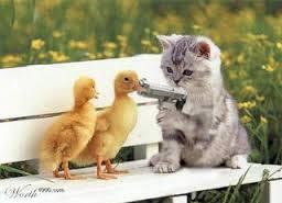 File:Duckhostage.jpg