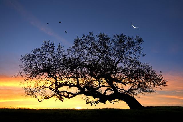 File:Sun and Moon.jpg