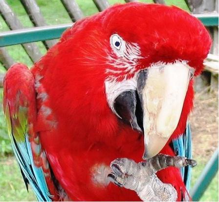 File:Evil Bird.jpg