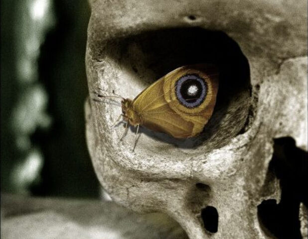 File:Moth skull.jpg