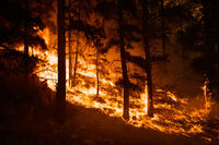 Burning-forest-picture-2-1-