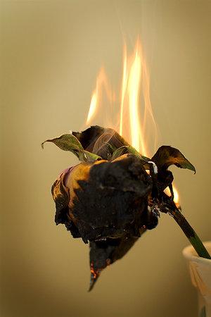 File:Burnt flowers fallen by mci.jpg