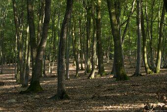 Deciduous-woods