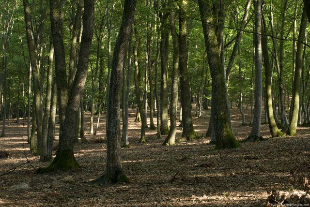 File:Deciduous-woods.jpg