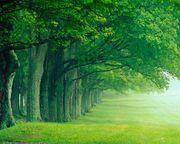Green-forest-wallpaper