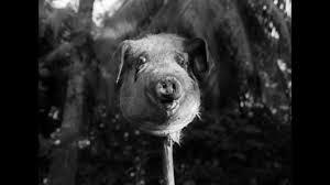 File:Dead pig.jpg