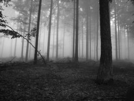 Foggy forest 1 640