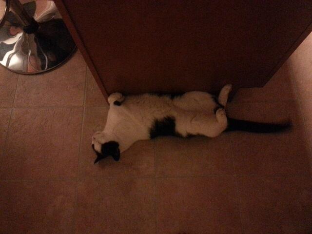 File:Fusion cat.jpg