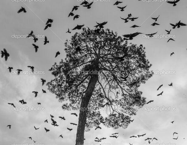 File:Depositphotos 28552289-stock-photo-a-flock-of-crows-circling.jpg