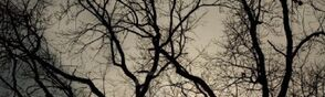 Bare-branches-sky1