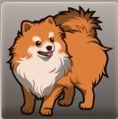 Molly's Dog