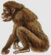 Fossil Ape Candidate for Hibagon (From a Japanese Website)