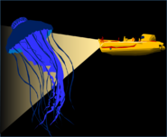 G Jellyfish