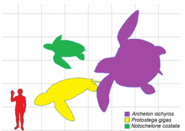 Prehistoric Turtle Size Comparison