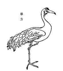 Bifang