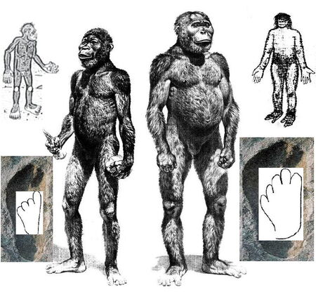 Mono grande