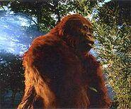 Gigantopithecus-model222