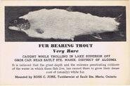Fur-bearing-trout