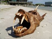 Freaky fish 1