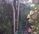 Chinese Giant Snake