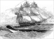 HMS Deadalus Sea Serpent