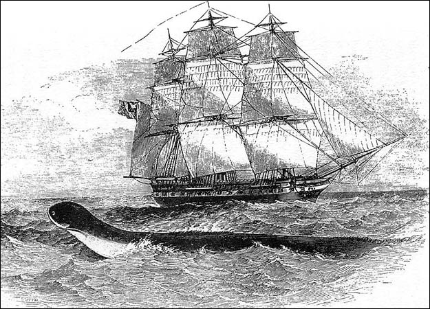 File:Hms-daedalus-sea-serpent.jpg