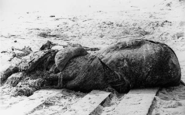 File:St augustine carcass.jpg