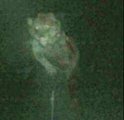 Michigan Dogman
