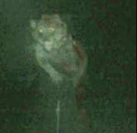 File:Michigan Dogman.jpg
