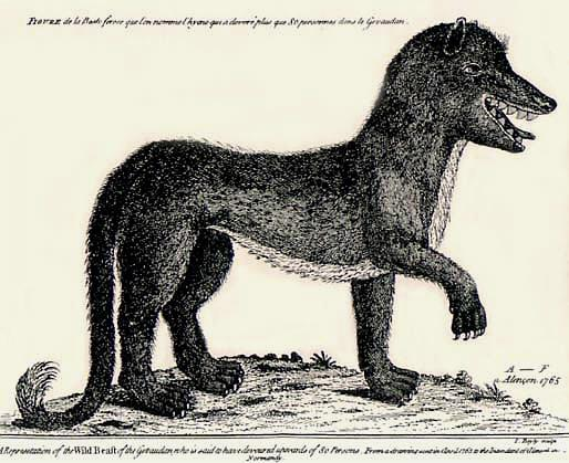 File:Gevaudanwolf.jpg