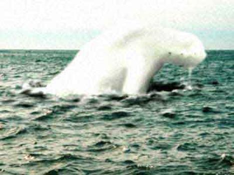 File:Antarctic humanoid 5.jpg
