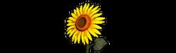 Head flower b
