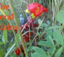 The Feral Plains