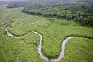 Indo baru plains