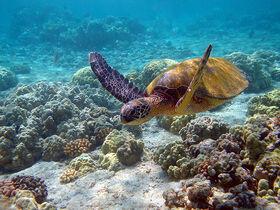 Pacific Orange coral reef