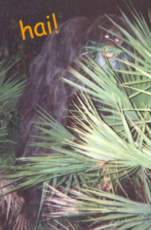 File:Myakka skunk ape 1.png
