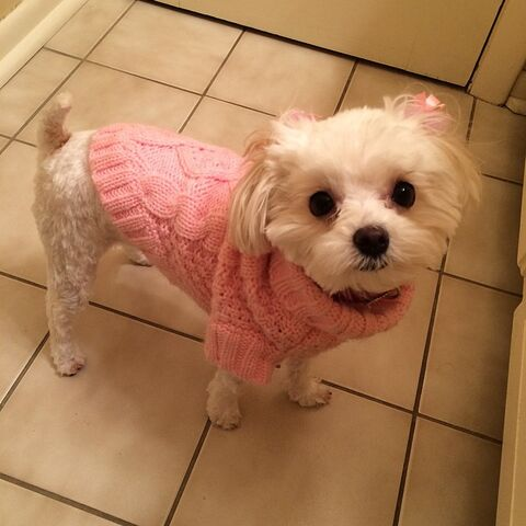 File:Maliboo pink sweater and nail polish Feb2015.jpg
