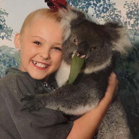 File:JoJo koala 2015-03-17.jpg