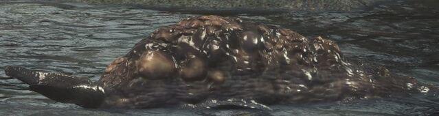 File:Rotten Slug.jpg