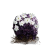 Blooming Purple Moss Clump (DSIII)