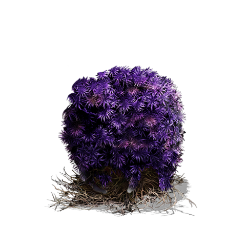 File:Purple Moss Clump (DSIII).png