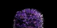 Purple Moss Clump (Dark Souls III)
