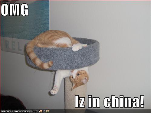 File:Cat-tree-to-china.jpg