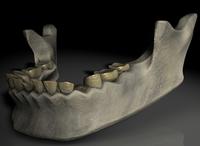 Prophetic Jawbone