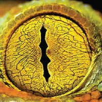 File:Reptile-01.png