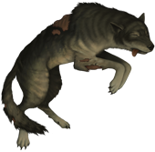 Wolf corpse
